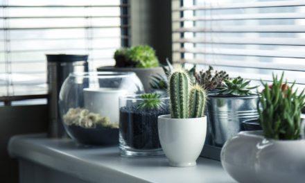 Rośliny jako dekoracja mieszkania